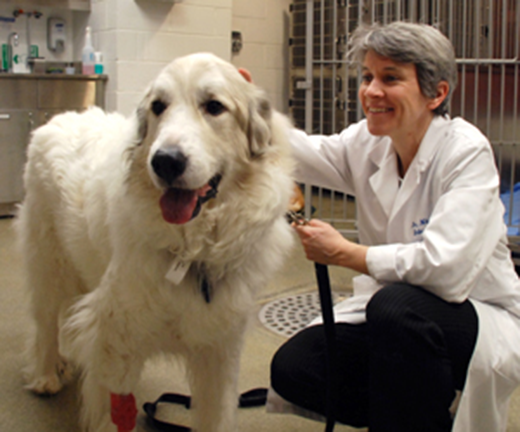 Thoughtful Thursday: Prolonging the lives of Dogs with Cancer