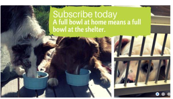 Bogo Bowl Cat Food