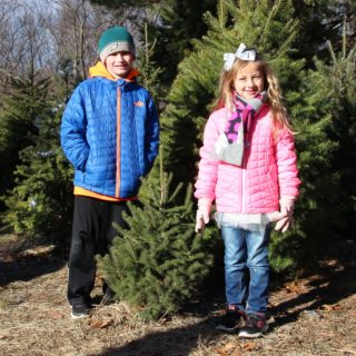 CUTTING DOWN OUR CHRISTMAS TREE – STARTING A FAMILY TRADITION