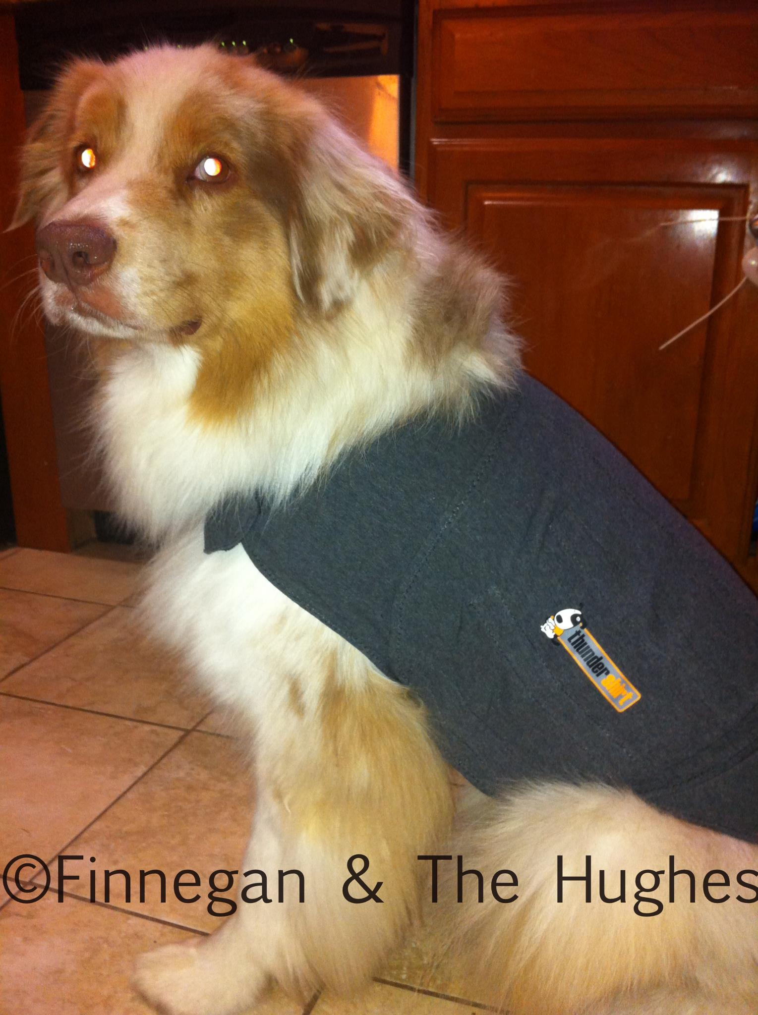 Thundershirt Saved the Night (Product Review)