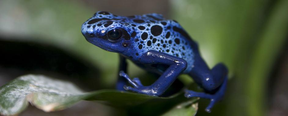 Adventure Aquarium New Exhibit! Frogs: Natures Messenger  {Ticket Giveaway!}