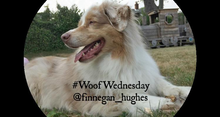 Woof Wednesday